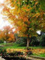 0882-bh-autumn-T