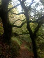 3838-pathway-tree-trunk-T