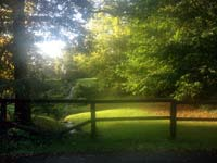 3901-fence-stream-trees-T