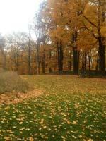 4687-autumn-scape-T