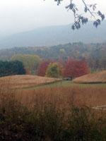 4836-autumn-landscape-T