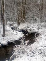6412-snow-winter-trees-stream-T