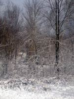 6426-snow-winter-trees-T