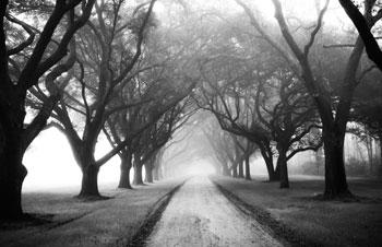 Trees-B&W1