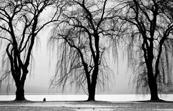 Trees-B&W3